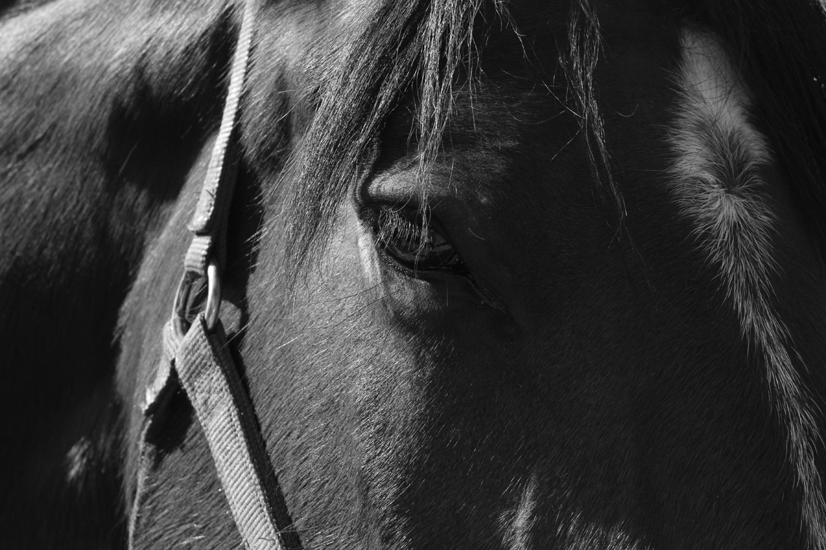 Sheree, the horse in Vermont