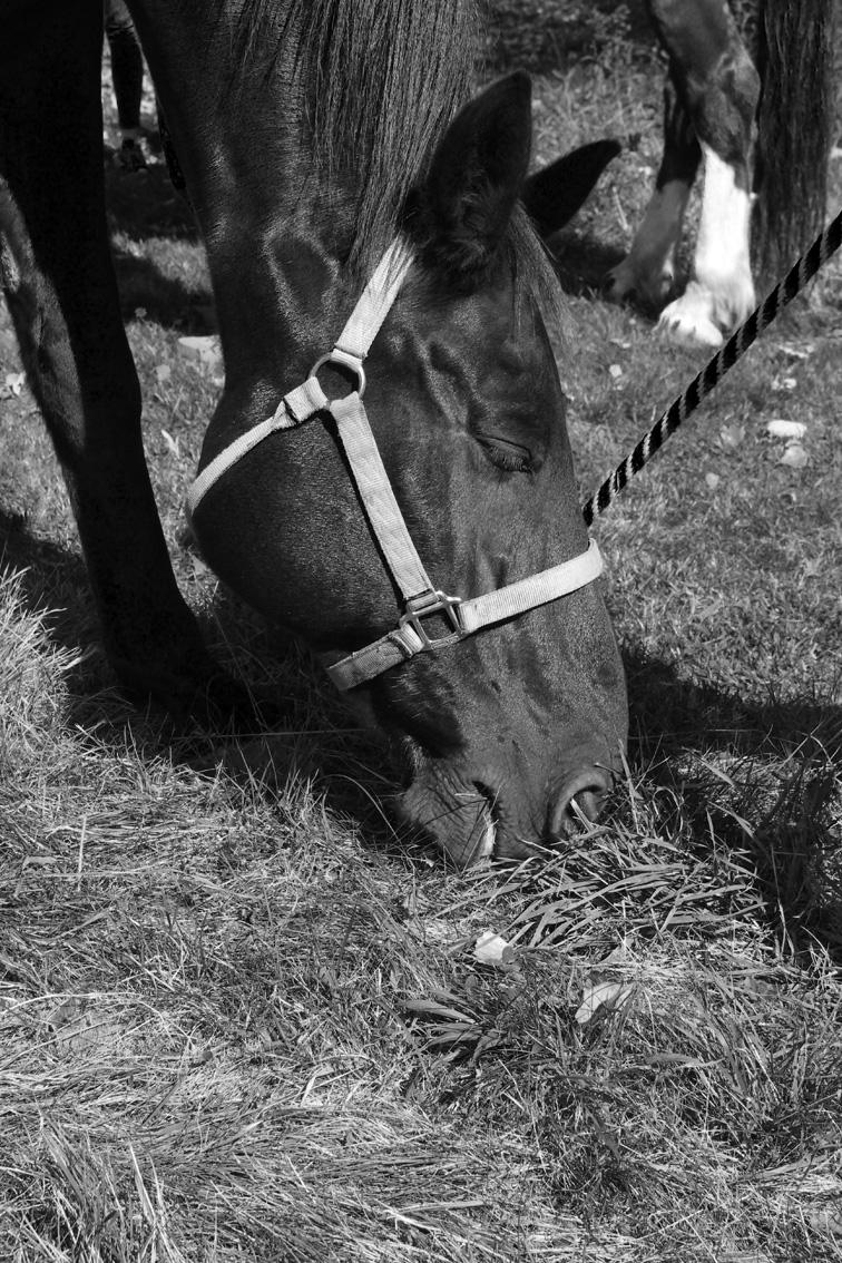 BlackJack horse at Stowe Mountain Ranch